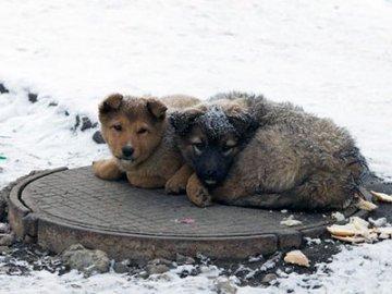 В Тюмени вновь будут отлавливать бродячих собак
