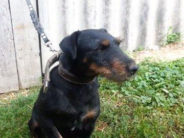Владелица ягдтерьера заплатит покусанному собакой мальчику 30 тыс. рублей