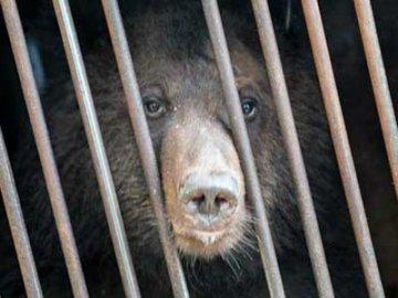 Владельца медведицы Симбы оштрафовали за жестокое обращение с животным