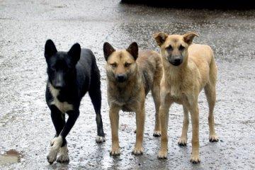 В Тюмени целую неделю будут отлавливать бесхозных животных