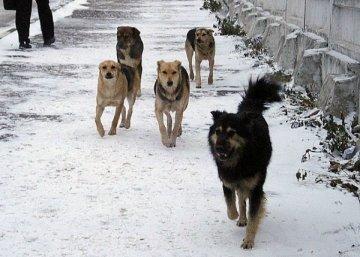 С 18 по 22 января в Тюмени пройдёт отлов бродячих собак